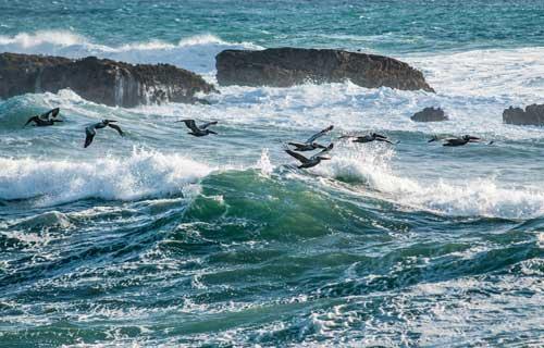 UN Declares War on OceanPlastics